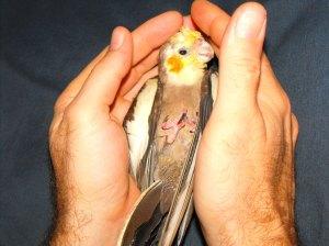 peanut baby bird